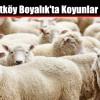 Boyalık'ta Koyunlar Çalındı